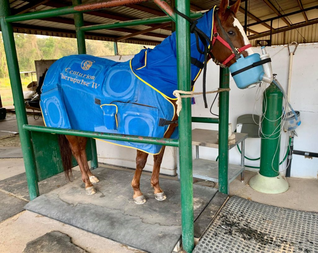Centurion Therapulse Therapy at Horse Swim