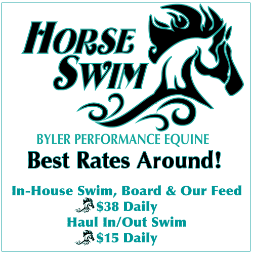 Best Horse Swim Pricing Best Rates